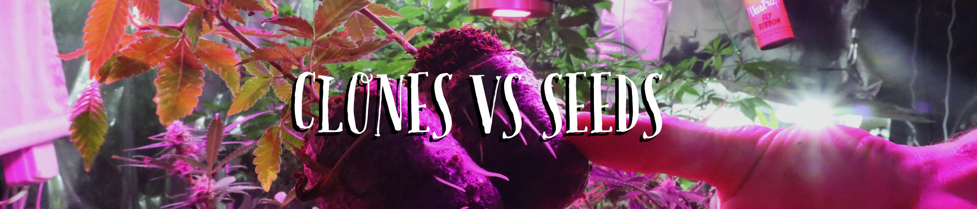 seeds vs clones