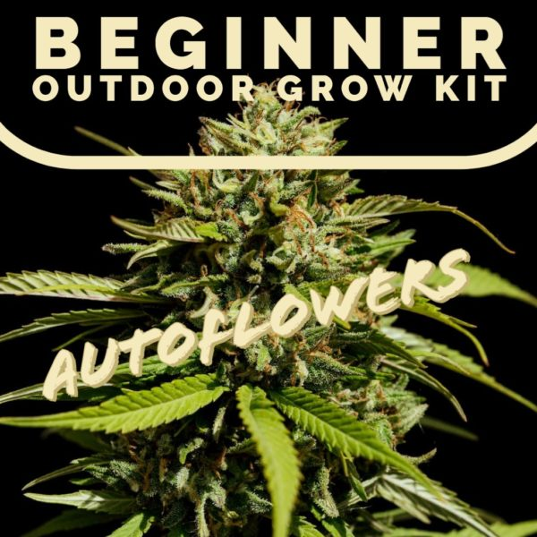 Beginner outdoor grow kit