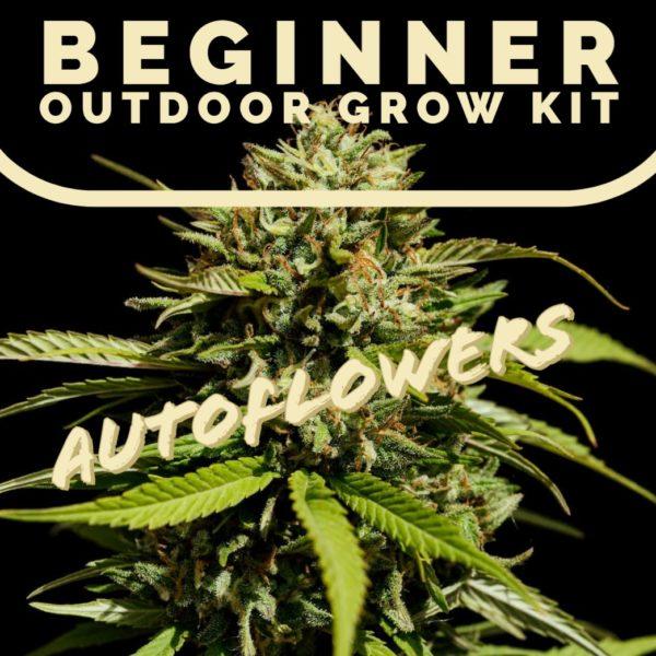 Beginner outdoor grow kit