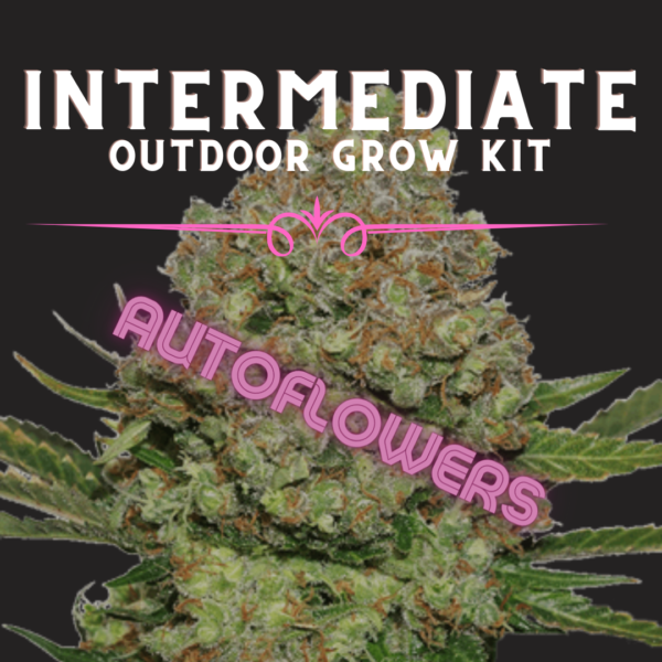 Intermediate Outdoor grow Kit Autoflower