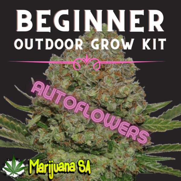 MSA Beginner Outdoor grow Kit Autoflower