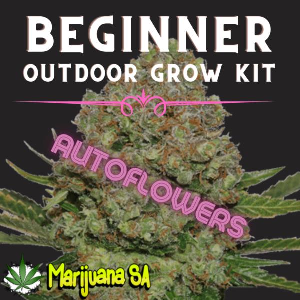 MSA Beginner Outdoor grow Kit Autoflower