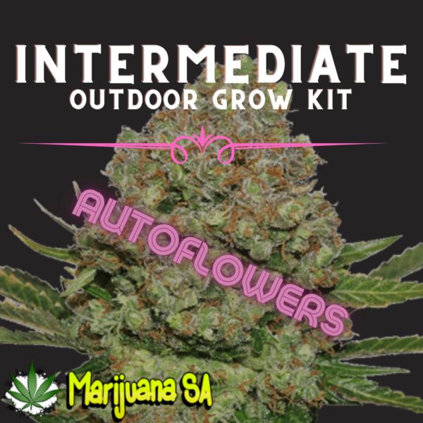 MSA Intermediate Outdoor grow Kit Autoflower