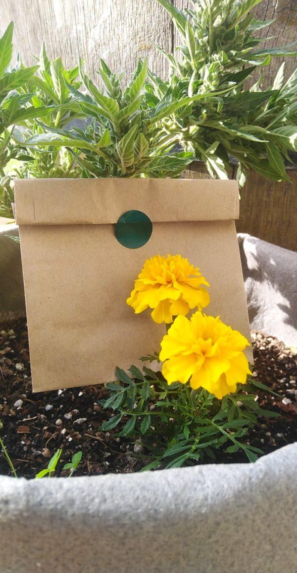 Companion Planter Pack
