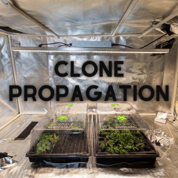 Cloning and Propagation