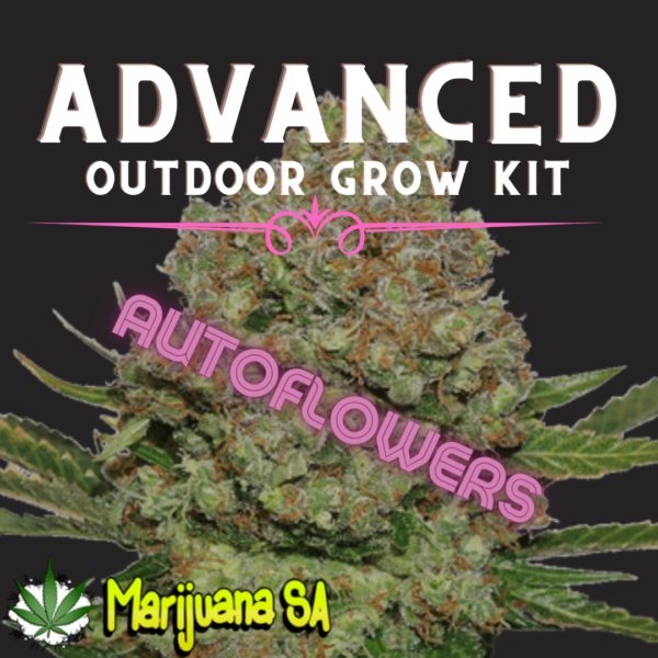 MSA Advanced Outdoor grow Kit Autoflower