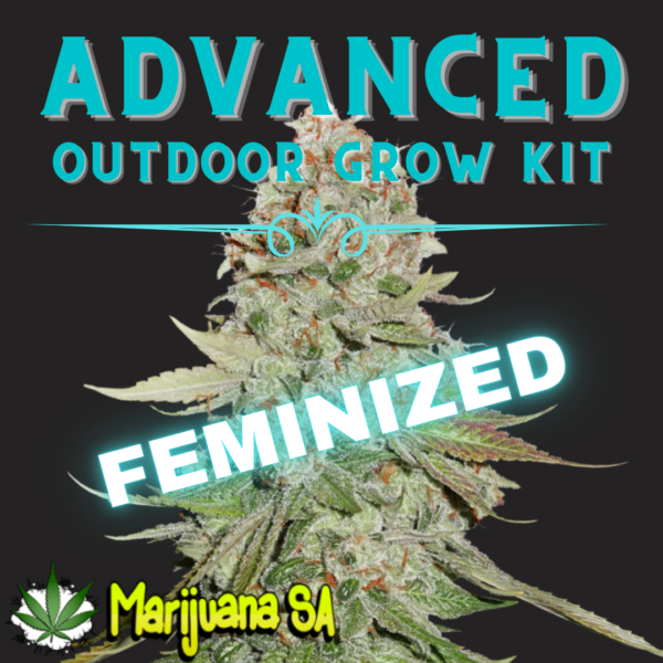 MSA Advanced Outdoor grow Kit Feminized