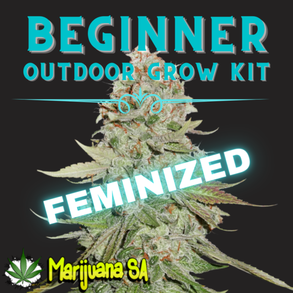 MSA Beginner Outdoor grow Kit Feminized