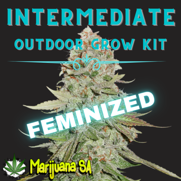 MSA Intermediate Outdoor grow Kit Feminized