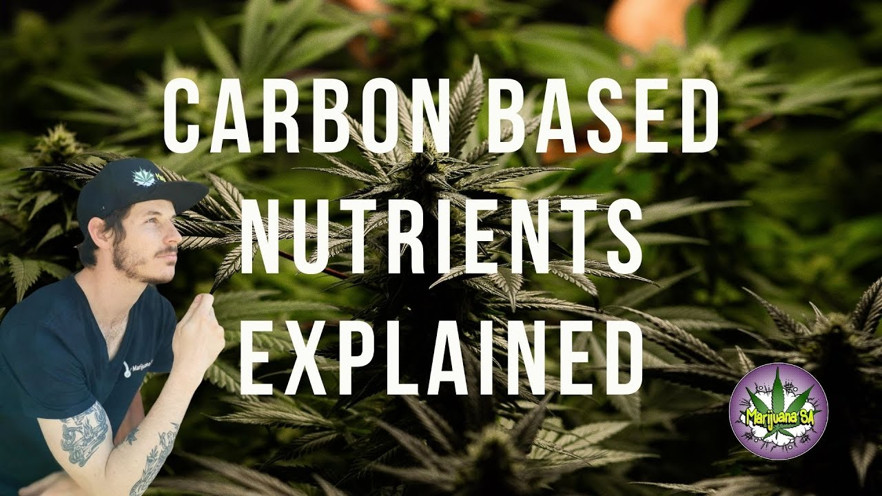 Cannabis nutrients explained