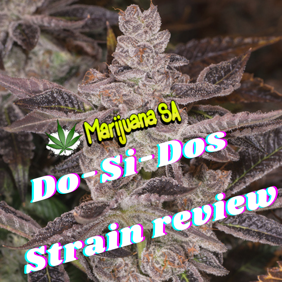 Strain Review - Do Si Dos