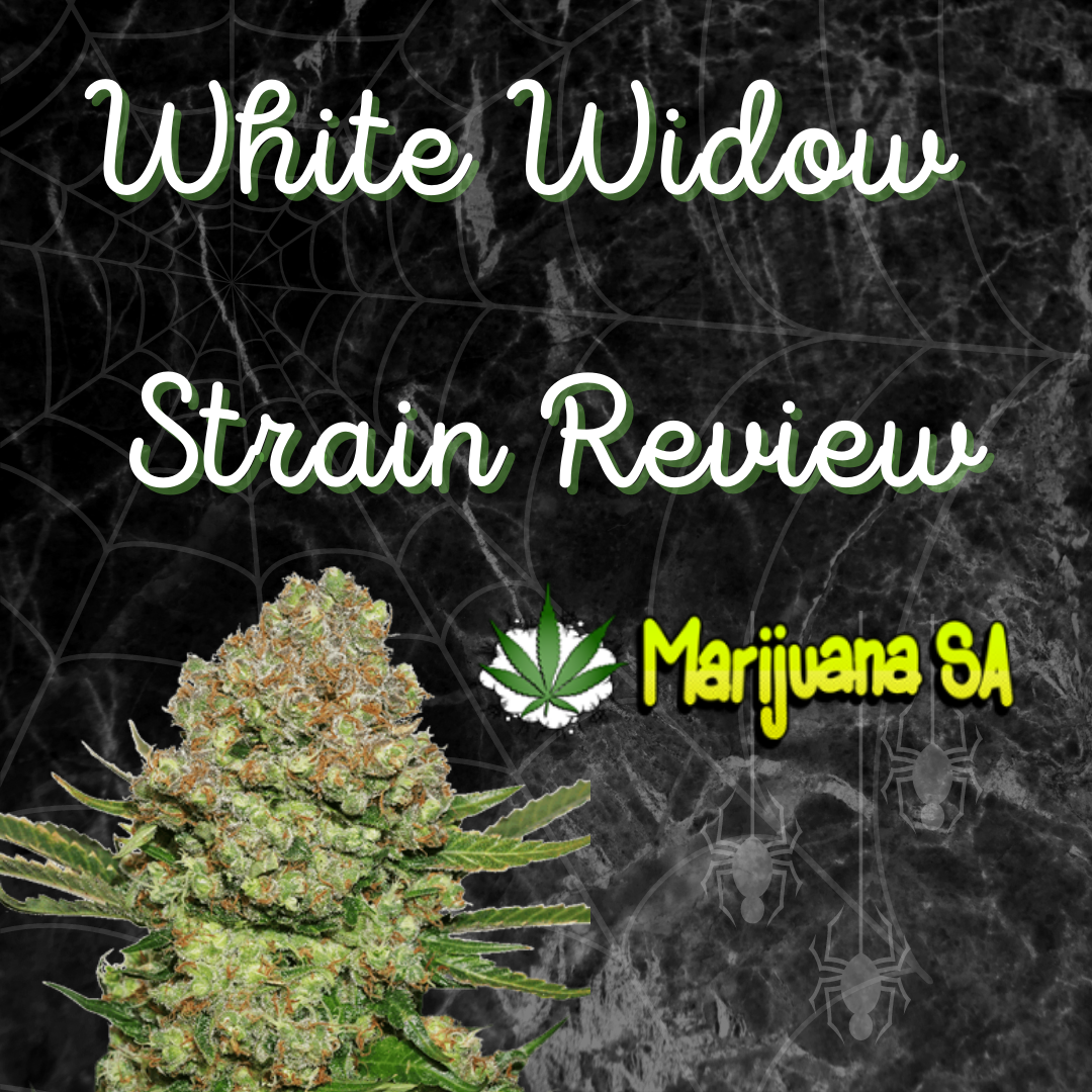 strain review White widow