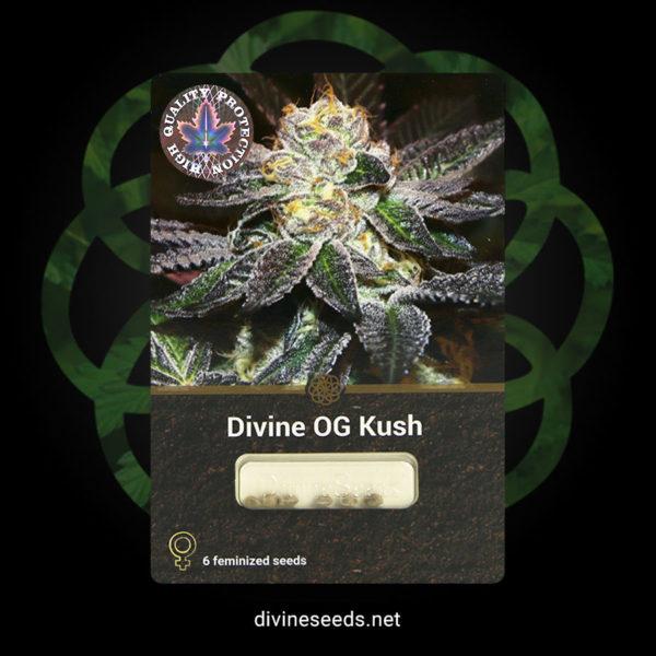 Divine OG Kush